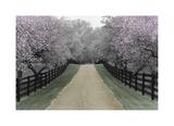 Apple Blossom Lane Giclee Print by Monte Nagler