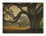 Two Oaks in Rain, Audubon Gardens Poster by William Guion