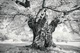 Portrait of a Tree, Study 18 Poster by Marcin Stawiarz