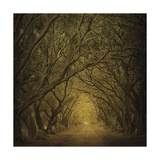 Evergreen Oak Alley (vertical view) Posters by William Guion
