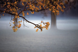 Fog Leaf Prints by Derek Jecxz
