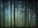 Monterey Pines in Fog Prints by William Guion