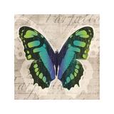 Butterflies II Giclee Print by Tandi Venter