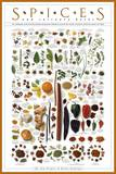 Spices and Culinary Herbs Posters
