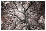 Ethereal Tree Affiche par Michael Hudson