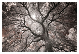 Ethereal Tree Print by Michael Hudson
