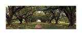 Enchanted Oaks Giclee Print by Mike Jones