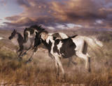 Wild Horses Poster Wall Decal