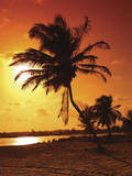 Sunset Palm Poster Poster