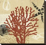 Coral Impressions III Stretched Canvas Print by Tandi Venter