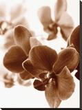 Dreamy Orchids II Reproduction transférée sur toile par Ily Szilagyi