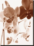 Dreamy Orchids I Stretched Canvas Print by Ily Szilagyi