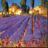 Late Afternoon, Lavender Fields Stretched Canvas Print by Philip Craig