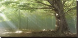 Lights Leinwand von Toni Vila