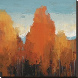 The Maples II Stretched Canvas Print by Peter Colbert