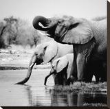 Namibia Elephants Stretched Canvas Print by Nina Papiorek