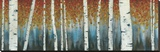Birch Haven Stretched Canvas Print by W. Blake