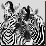 Namibia Zebras Stretched Canvas Print by Nina Papiorek