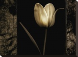 White Tulipa I Stretched Canvas Print by Rick Filler