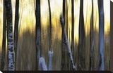 The Forest at Dawn Stretched Canvas Print by Marvin Pelkey