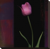Red Tulip II Stretched Canvas Print by Rick Filler