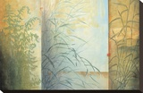 Ferns and Grasses Stretched Canvas Print by Don Li-Leger
