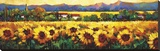Sweeping Fields of Sunflowers Stretched Canvas Print by Nancy O'toole