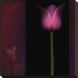 Red Tulip I Stretched Canvas Print by Rick Filler