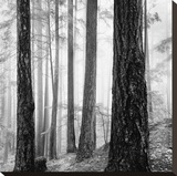 Capilano Forest Stretched Canvas Print by  Lsh