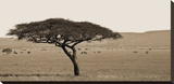 Serengeti Horizons I Stretched Canvas Print by Jeff/Boyce Maihara/Watt