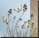 Butterflies Stretched Canvas Print by Caroline Gold