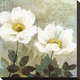 Anemone II Stretched Canvas Print by Keith Mallett