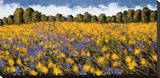 Fields of Gold Stretched Canvas Print by Wayne Leidenfrost