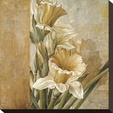 Champagne Daffodils II Stretched Canvas Print by Linda Thompson