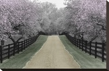 Apple Blossom Lane Stretched Canvas Print by Monte Nagler