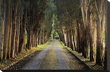 Tree Tunnel Stretched Canvas Print by Michael Cahill