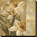 Champagne Daffodils I Reproduction transf&#233;r&#233;e sur toile par Linda Thompson