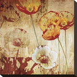 Poppy Heat I Stretched Canvas Print by Tandi Venter