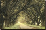 Evergreen Alley Stretched Canvas Print by William Guion