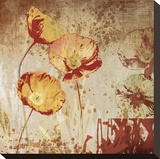 Poppy Heat II Stretched Canvas Print by Tandi Venter