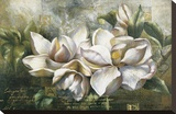 Dawning Magnolias Stretched Canvas Print by  Meng