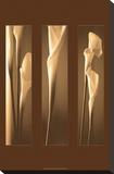 Illumination Reproduction sur toile tendue par Cinzia Ryan