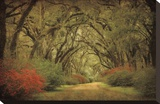 Road Lined With Oaks & Flowers Stretched Canvas Print by William Guion