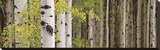 White Forest Standing Reproduction transférée sur toile par Heather Ross