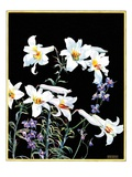 """Easter Lilies,""April 1, 1933 Giclee Print by Nelson Grofe"