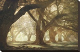 Oak Alley Morning Light Stretched Canvas Print by William Guion