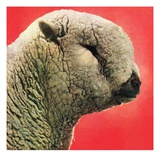 """Lamb,""May 1, 1948 Giclee Print by Stanley Johnson"