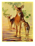 """Doe and Fawns,""April 29, 1933 Giclee Print by Jack Murray"