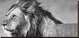 Xavier Ortega - Lion Eyes - Şasili Gerilmiş Tuvale Reprodüksiyon