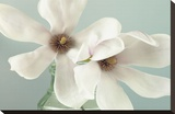 Magnolias Stretched Canvas Print by Assaf Frank